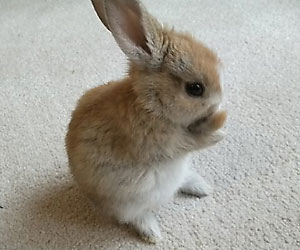 Baby brown rabbits images galleries for Rabbit house images