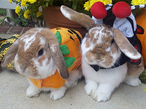 Cute Pet Bunny Photos Submit House Rabbit Pics